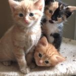 Kittens, kittens, everywhere…..